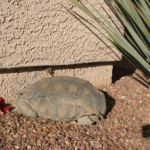 Has your tortoise peeked out?