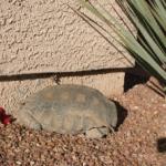 ¿Ha visto su tortuga?