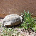 Humanos, No Tortugas, Se confunden por el Tiempo Variable