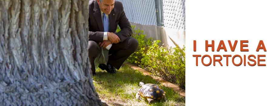 Tortoise Group – Tortoise Group